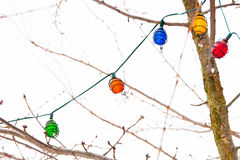 Light garland on tree branches in winter Royalty Free Stock Image