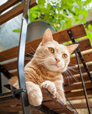 Light Ginger Tabby Cat Sitting on Chair Outside Under Table Stock Images