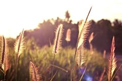 Light. With grass in evening summer Royalty Free Stock Photography
