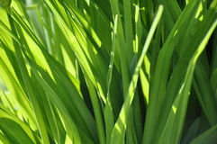 The light on the grass Royalty Free Stock Photo
