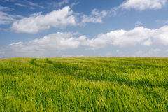 Light grassy field with white fluffy clouds Royalty Free Stock Photography