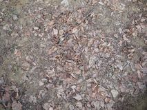 Light gray background color - the structure of fallen leaves on the ground royalty free stock images