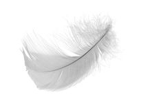 Light gray chicken feather Royalty Free Stock Images