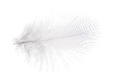 Light gray small feather on white background Stock Image