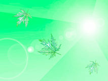 Light green background with leaves, eco design Royalty Free Stock Photography