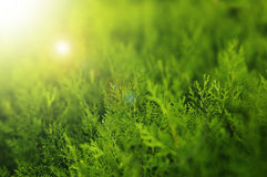 Light green background Royalty Free Stock Photos