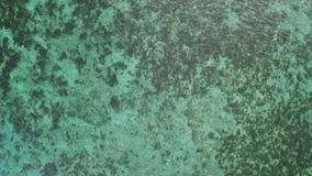 Light green bottom of the ocean. Philippines. Aerial view. Light green bottom of the ocean. Philippines. Aerial view stock footage
