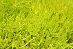 Light green bush Stock Photos