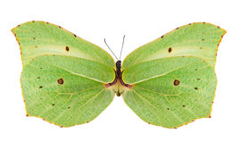 Light green butterfly isolated on white Stock Photography