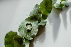 Light Green Eucalyptus engagement ring with water Drops. Green Eucalyptus with water Drops , macro water drops, light green leaves, romantic and spa, relaxing royalty free stock photos