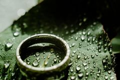 Light Green Eucalyptus engagement ring with water Drops. Green Eucalyptus with water Drops , macro water drops, light green leaves, romantic and spa, relaxing stock image