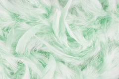 Light green feathers background. Beautiful green feathers texture background Royalty Free Stock Images