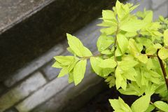 Light green foliage with dew against stone steps Stock Images