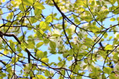 Light green leaves Stock Photography