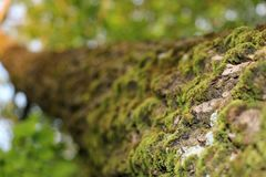 Light green moss royalty free stock photo