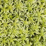 Light green moss texture or background macro, selective focus, shallow DOF Stock Images