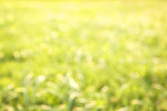 Light green natural background blur. Royalty Free Stock Photography