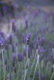Light green plant Royalty Free Stock Photo