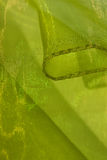 Light green shiny cloth Royalty Free Stock Photos