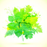 Light green spring leaves vector banner Stock Images
