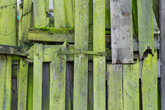 Light green wood planks vintage or grunge texture Stock Images