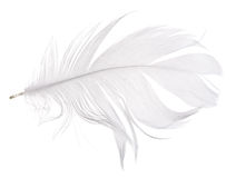 Light grey goose feather isolated on white Stock Photo