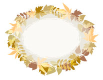 Light grey oval background for text with the image of autumn leaves of different trees. Stock Images