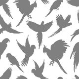 Light grey parrots silhouette seamless pattern. Light grey parrots silhouette on white seamless background pattern. Vector illustration Stock Image