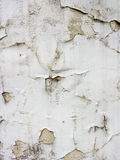 Light Grey textured background closeup. Abstraction. Light Grey textured background closeup. Light Grey old plaster wall Royalty Free Stock Photo