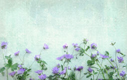 Light grunge background with violet wild flowers. Stock Photography