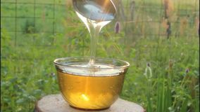 Light and honey. Honey in rays of the evening Sun. stock footage