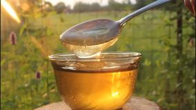 Light and honey. Honey in rays of the evening Sun. stock video