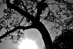 Light, Hope Royalty Free Stock Photos