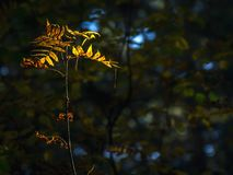 Light Of Hope Concept: Leaves Glowing In Sunlight In A Dark Mysterious Fantasy Forest. Autumn, Fall Colorful Foliage. Light Of Hope Concept: Leaves Glowing In stock photo