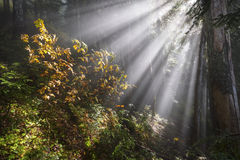 Light of Hope. Rays beam through the clouds at 4000 feet along the Liumchen Lake Trail, Fraser Valley,BC, Canada Stock Photo