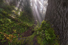Light of Hope. Rays beam through the clouds at 4000 feet along the Liumchen Lake Trail, Fraser Valley,BC, Canada Royalty Free Stock Images