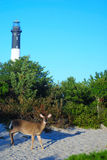 Light House. This is a shot of a lighthouse on Fire Island off the coast of Long Island in New York state. The shot is taken from the land side. Brush and a deer Stock Photo