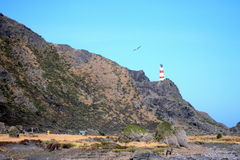 Light House at Cape Palliser, New Zealand Stock Image