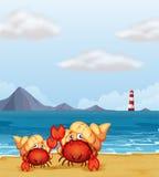 A light house and crabs Stock Photos