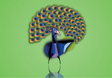 Beautiful peacock with open tail illustration. On green background Royalty Free Stock Photography