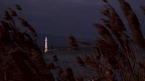 A light house is visible through a shot of reeds stock footage