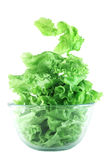 Light lettuce salad concept. Light lettuce salad in transparent bowl isolated on white lightness concept Stock Images