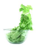 Light lettuce salad concept. Light lettuce salad in transparent bowl isolated on white lightness concept Stock Image