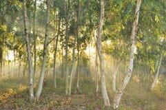 Light of life. Sunrise ,The light that make you happy , hopeful Royalty Free Stock Photos