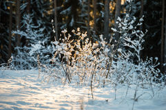 Light light snow - forest. Take this picture and show, how beauty is the nature Stock Images