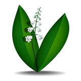Light lily of the valley Royalty Free Stock Photos