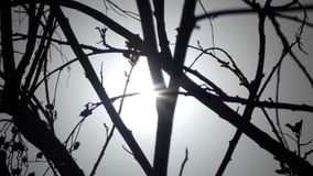 Light. A little of contrast between a tree and the sun, with no effects Stock Photography