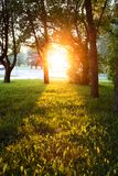 The light of low sun on sunset shining through some trees and leaving path of light on grass. The light of low sun on sunset shining through some trees and Stock Photography
