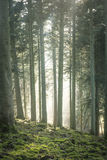 Light and mist in forest Stock Images