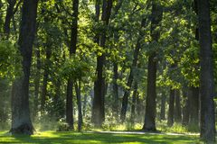 Light mist in the morning fresh summer forest.  royalty free stock photo